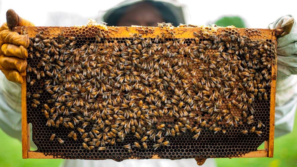 abejas y leche de almendras