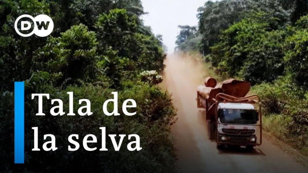 deforestación tala de la selva